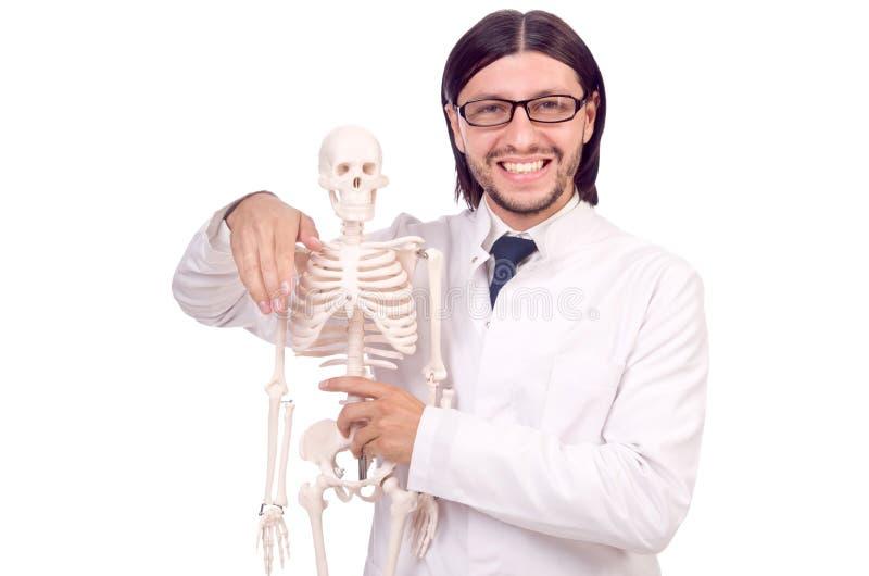 Lustiger Lehrer mit dem Skelett lokalisiert stockfotos