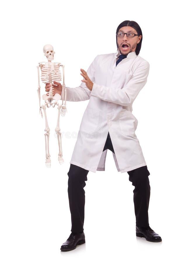 Lustiger Lehrer mit dem Skelett lokalisiert stockbild