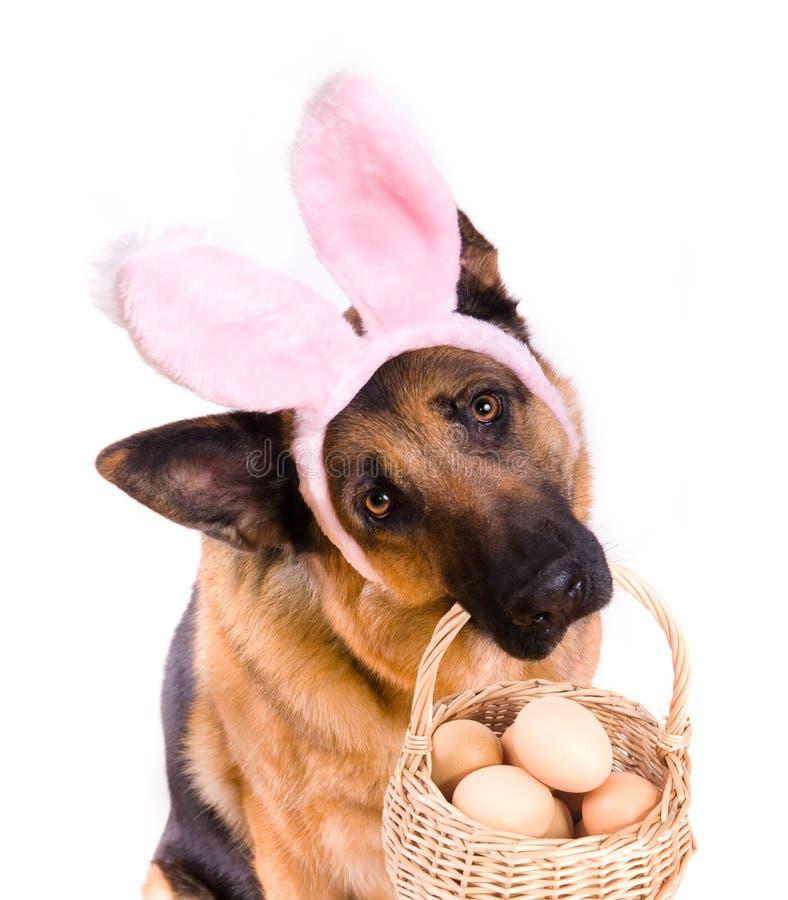 Lustiger Ostern-Hund mit Korb lizenzfreie stockfotografie