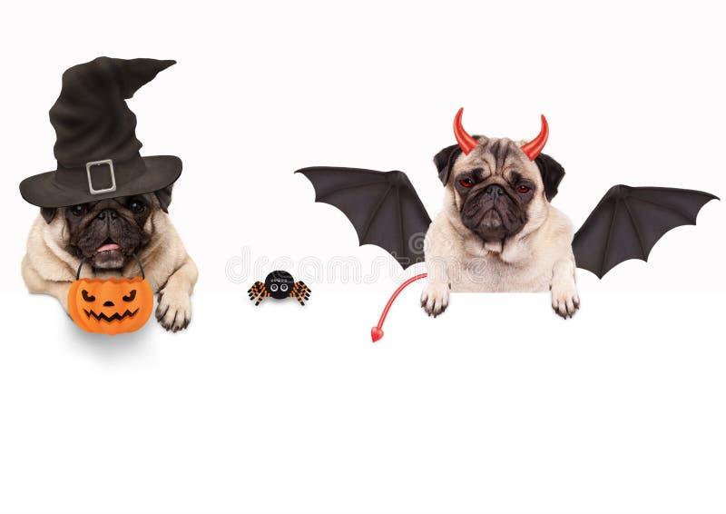 Lustiger Pughund kleidete oben für Halloween mit Spinnen- und Kürbiskorb an stockfoto