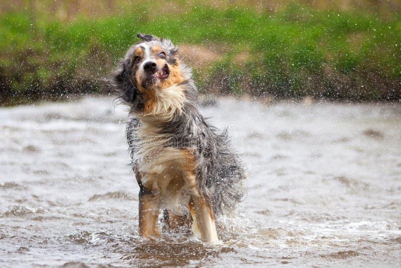 Lustiger rüttelnder Hund lizenzfreies stockbild