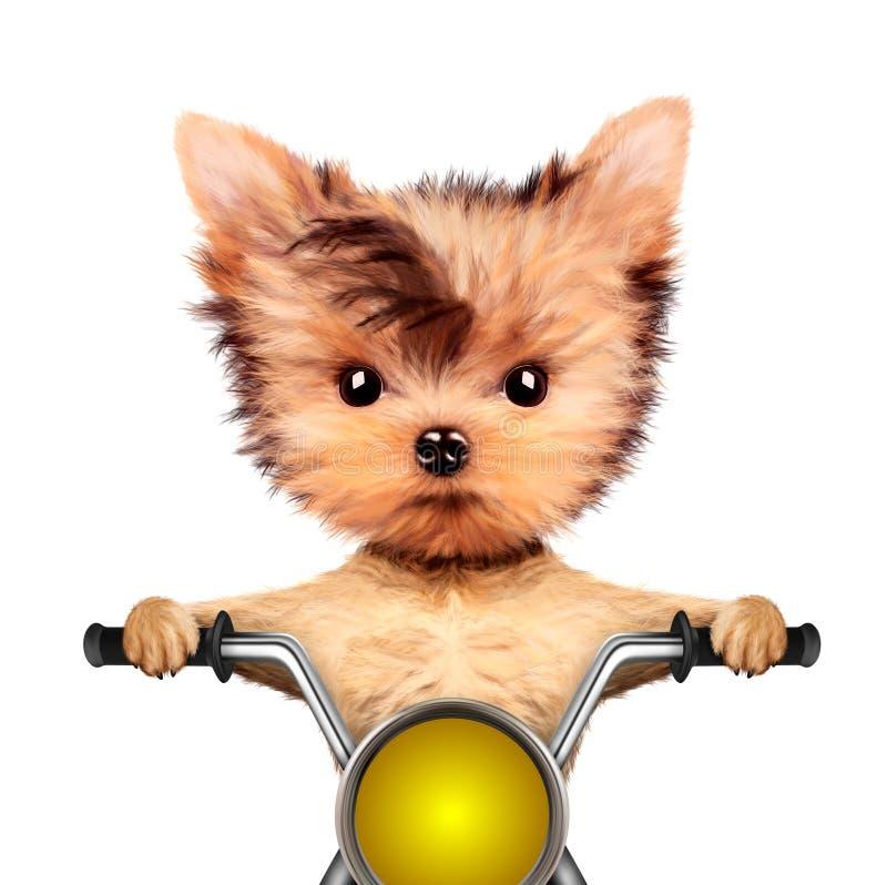 Lustiger Radfahrerhund, der auf einem Zerhacker sitzt stock abbildung