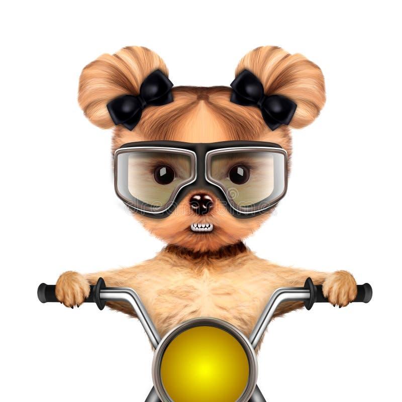 Lustiger Radfahrerhund, der auf einem Zerhacker sitzt vektor abbildung