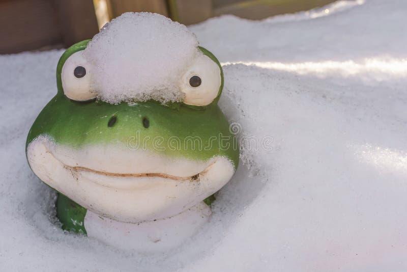 Lustiger Schuss eines Frosches, der aus dem Schnee heraus schaut stockfoto