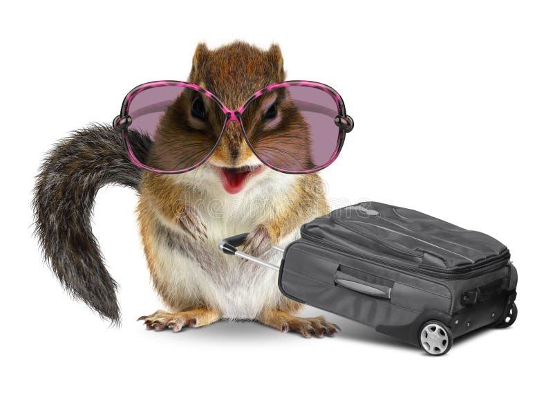 Lustiger Tourist, Tierstreifenhörnchen mit Gepäck auf Weiß stockbild