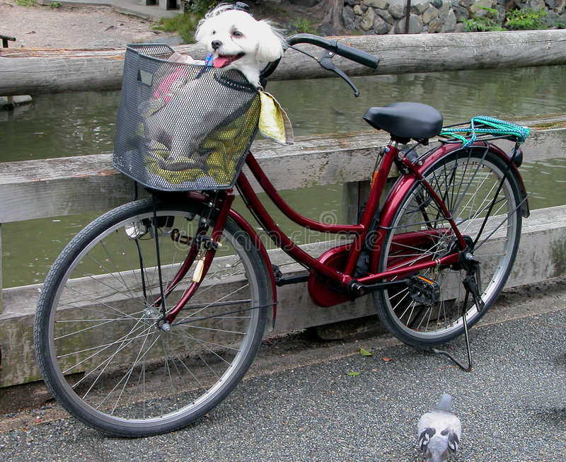 Lustiges Fahrrad stockfotos