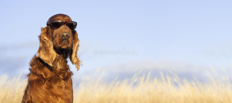 Lustiges Hundeschauen lizenzfreie stockfotografie