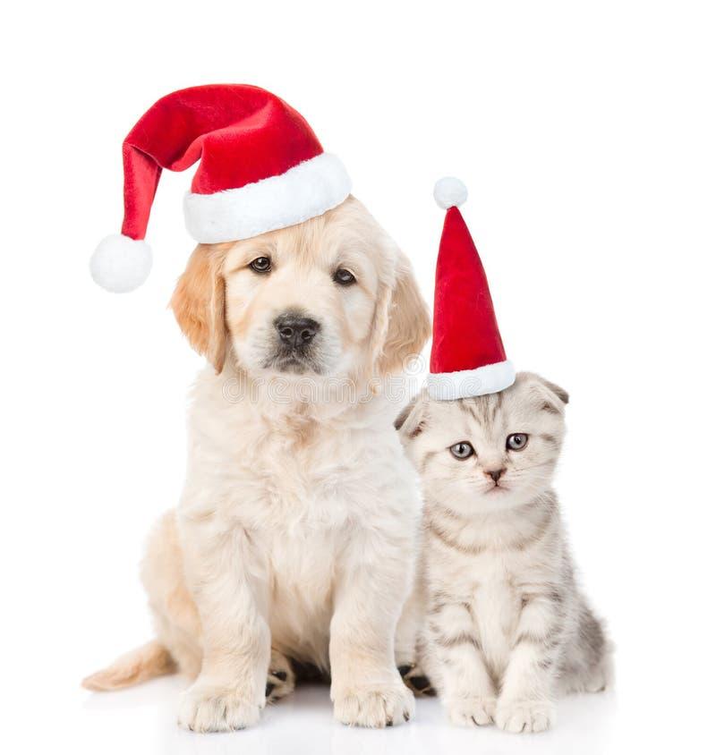 Lustiges Kätzchen und golden retriever-Welpe in den roten Weihnachtshüten zusammen Getrennt auf weißem Hintergrund stockfotos