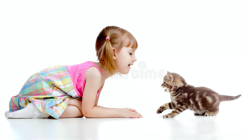 Lustiges Kind, das mit schottischem Kätzchen spielt lizenzfreie stockbilder