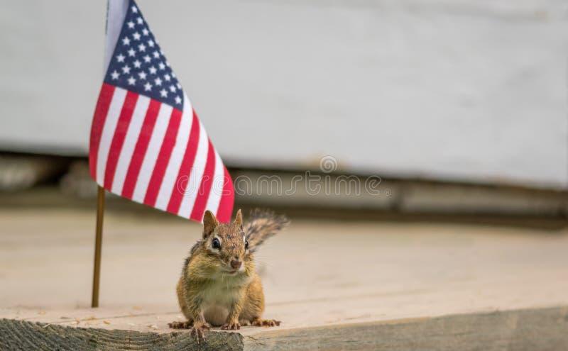 Lustiges kleines Oststreifenhörnchen steht nahe bei amerikanischer Flagge lizenzfreies stockbild