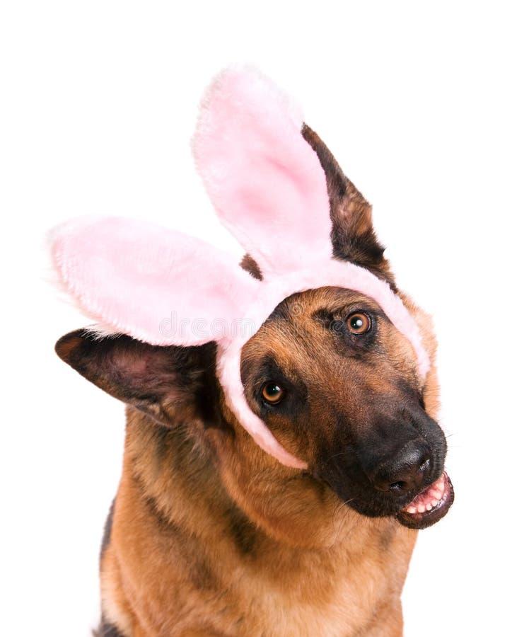 Lustiges Ostern-Hundehäschen lizenzfreie stockfotos