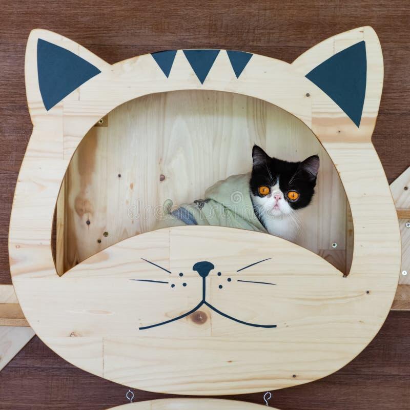 Lustiges Porträt der Schwarzweiss-Katze schauend mit lustigem Gefühlgesicht auf dem Katzengesichtsregal Nette kleine Katze, die d lizenzfreie stockbilder