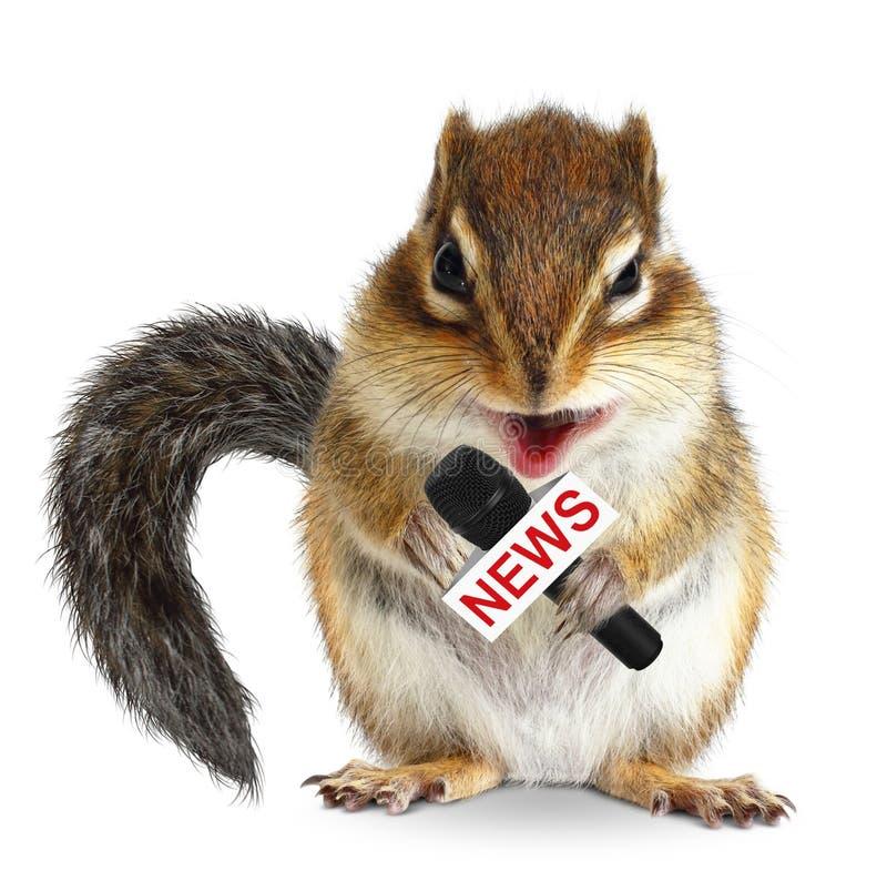 Lustiges Tiereichhörnchen mit Nachrichtenmikrofon stockbilder
