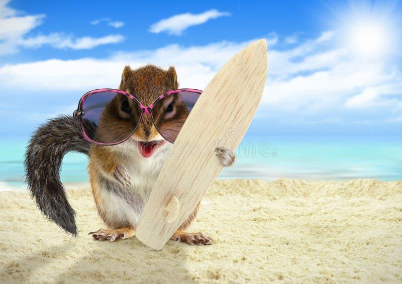 Lustiges Tiereichhörnchen mit Sonnenbrille und Surfbrett auf dem Strand lizenzfreies stockbild
