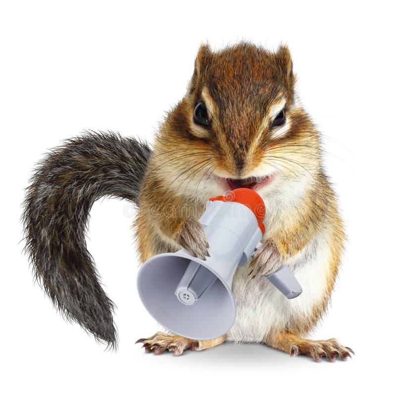 Lustiges Tierstreifenhörnchen, das in Megaphon schreit lizenzfreies stockfoto