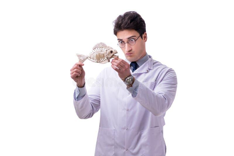 Lustiges verrücktes Professor paleontologyst, das Tierskelette I studiert lizenzfreie stockbilder