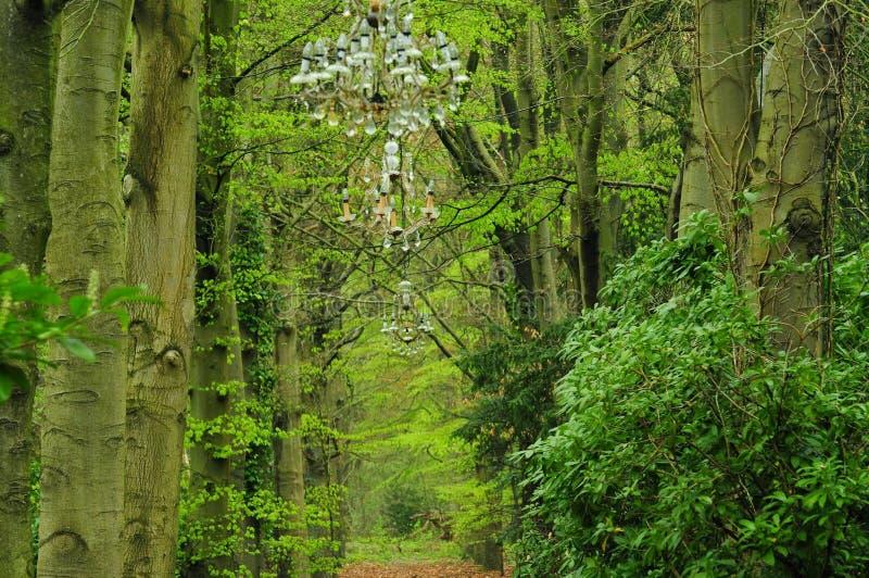 Lustre dans la forêt photo libre de droits