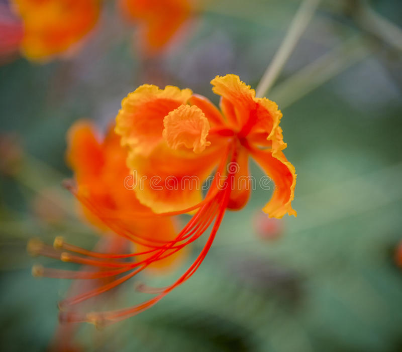 Lustro della molla del fiore, bello fotografia stock libera da diritti
