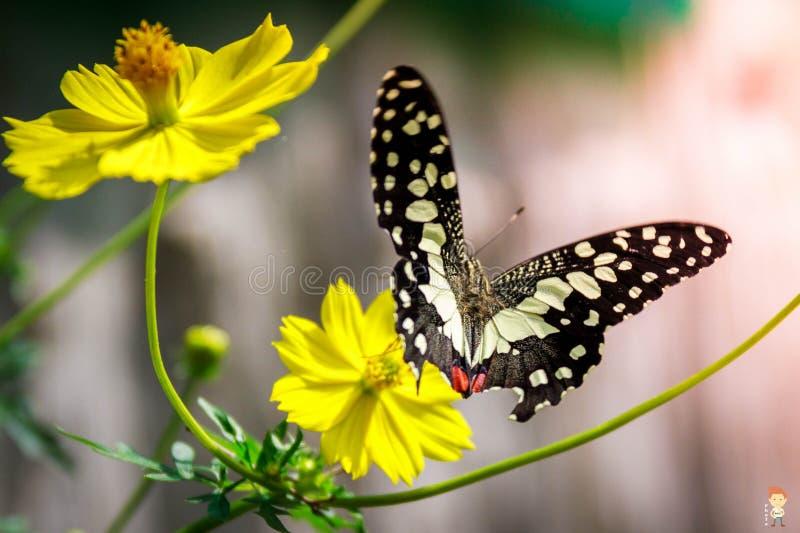 Lustro della molla del fiore, bello fotografia stock