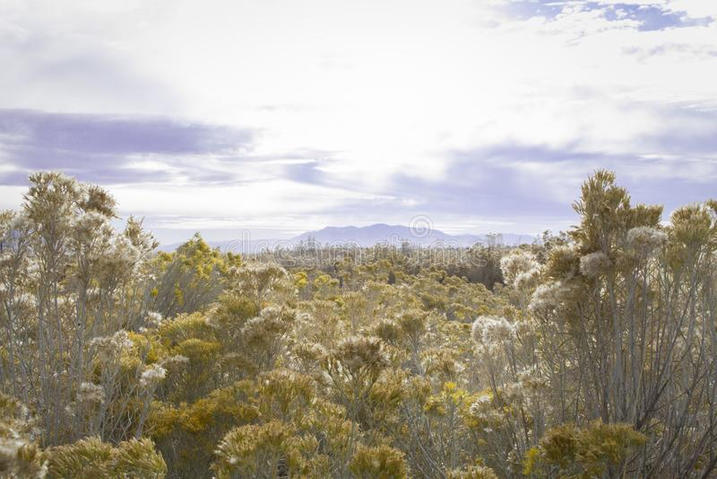 Lustro sulle colline gialle fotografia stock libera da diritti