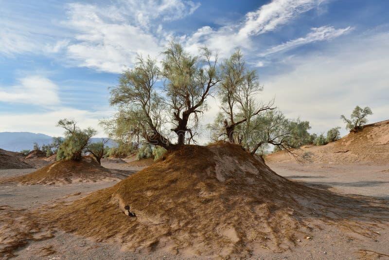 Lut Desert lokaliserar nära Kerman, Iran royaltyfri bild