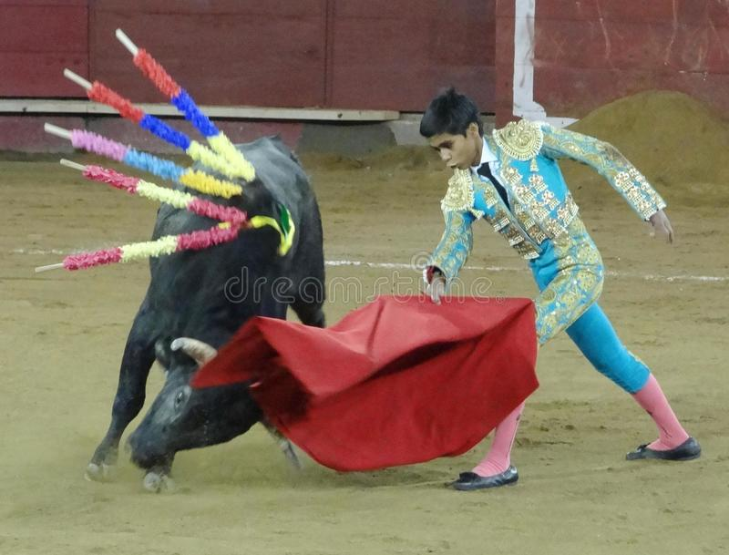 Luta de Bull, Quito, Equador fotografia de stock royalty free