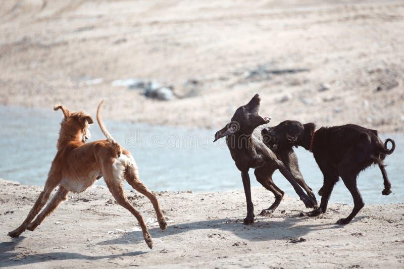 Luta de cão fotos de stock royalty free