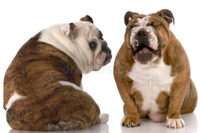 Luta de cão engraçada fotografia de stock