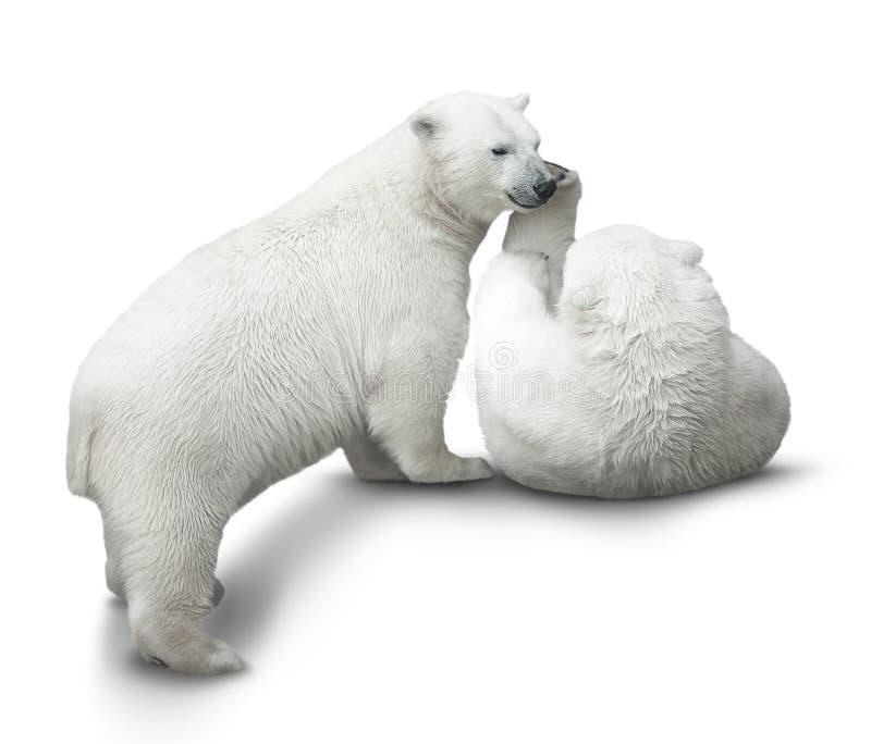 Luta dos filhotes de urso fotografia de stock royalty free