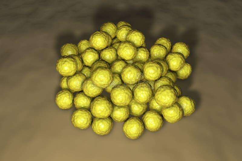 Luteus μικροκόκκων βακτηριδίων διανυσματική απεικόνιση