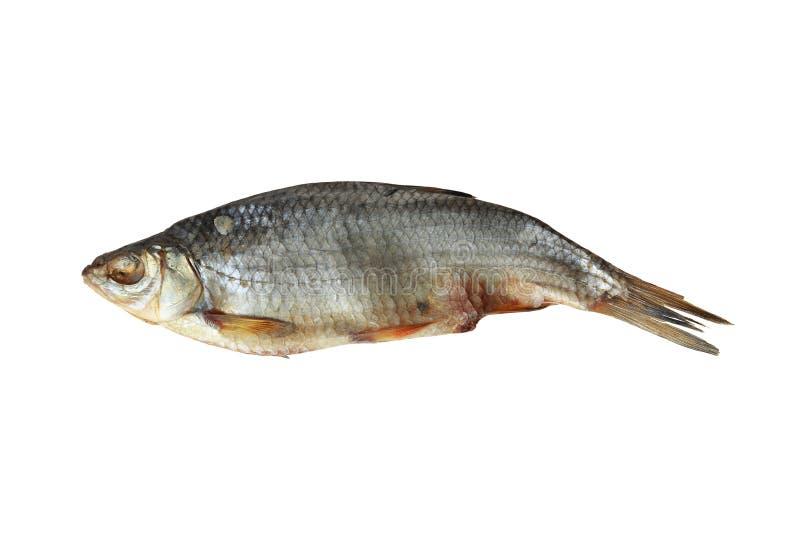 Lutfisk fotografering för bildbyråer