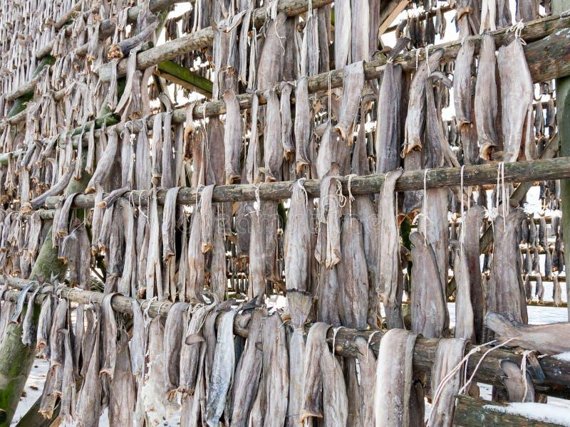 Lutfisk på kuggen i Svolvaer, Lofoten, Norge royaltyfri foto