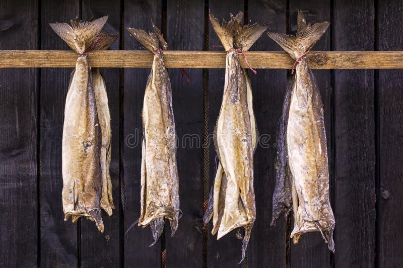 Lutfisken är den osaltade fisken, speciellt torsk som torkas av kall luft fotografering för bildbyråer