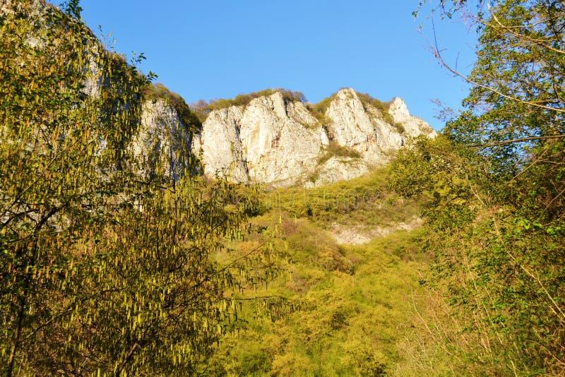 Lutning som täckas med vårvegetation som blomstrar hängear av björkträd i bakgrunden för skog och för blå himmel royaltyfri foto