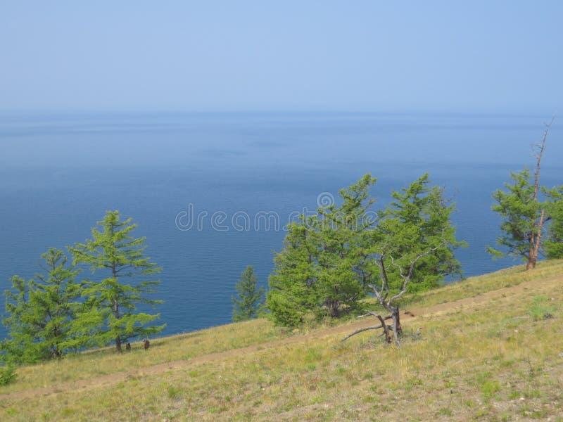 Lutningen av kullen som är sällsynt sörjer träd, sikten av sjön LandskapOlkhon ö arkivfoto