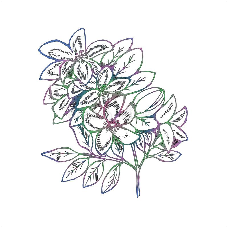 Lutningillustration av filialer av blommor av lilan Manuella diagram royaltyfri bild