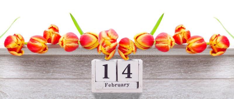 Luty 14, czerwoni żółci tulipany dla walentynki ` s dnia zdjęcie stock