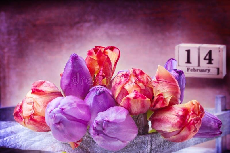 Luty 14th, Różowi Purpurowi tulipany dla walentynki ` s dnia obrazy royalty free