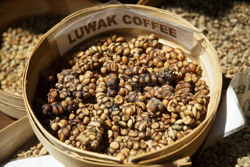 Raw Luwak Coffee