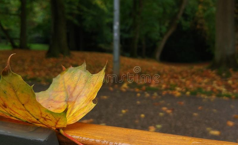 Luxembourg's autumn royalty free stock photography