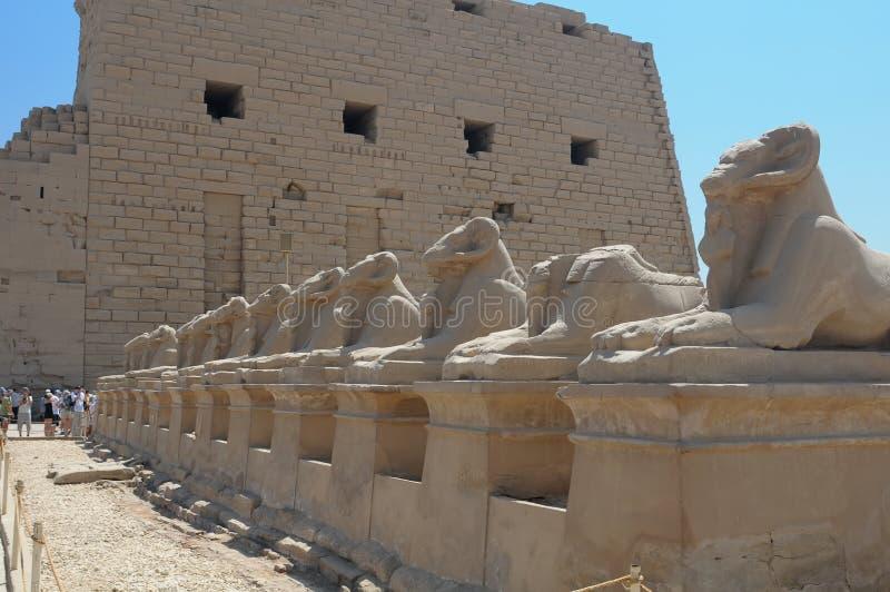 Download Luxor Sphinx Egypt stock photo. Image of effigy, stone - 6646914