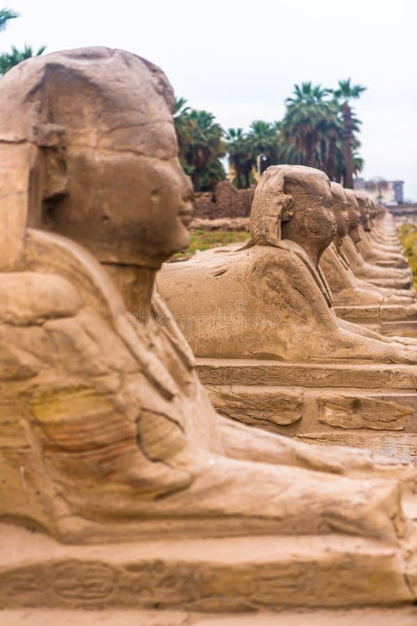 Luxor Temple, Karnak, Египет стоковое изображение rf