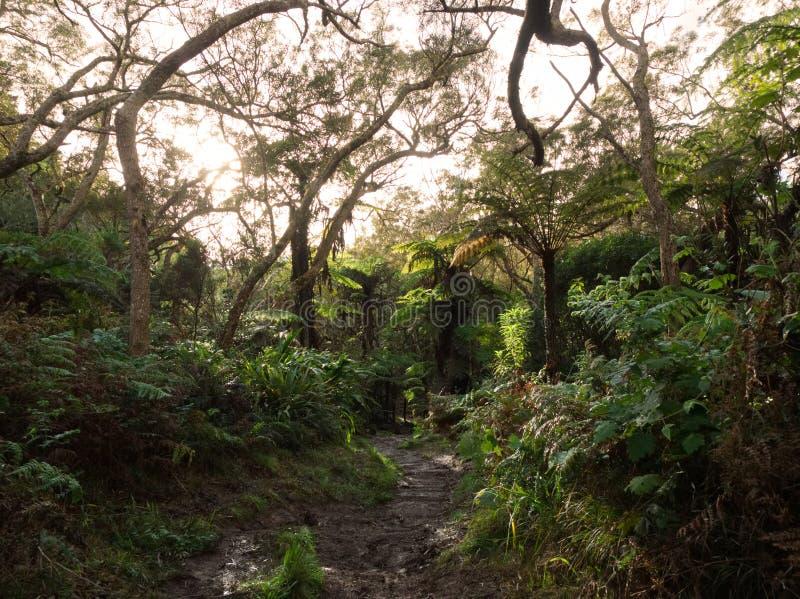 Luxuriance dans la forêt principale sur l'île tropicale photo stock
