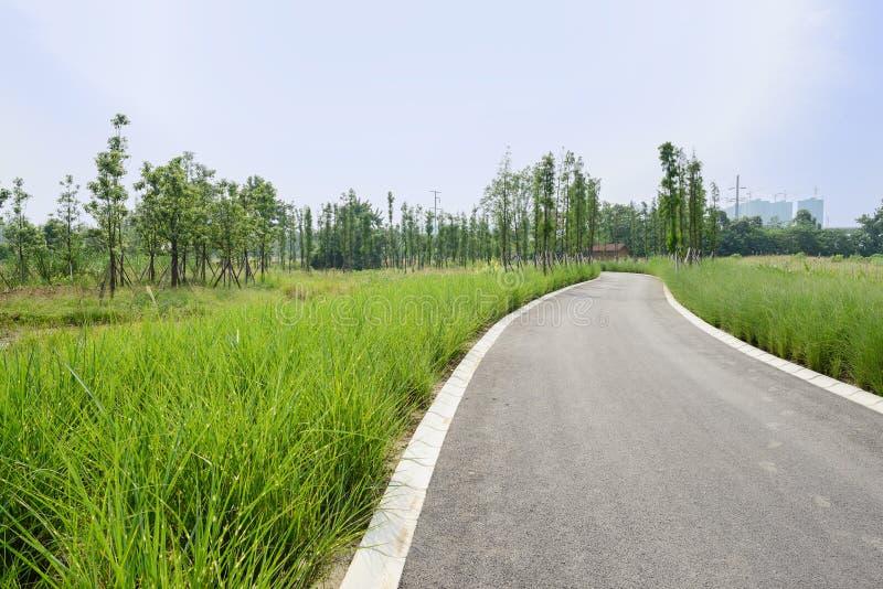 Luxuriant тростники и заводы вдоль изгибать дорогу асфальта стоковое фото rf