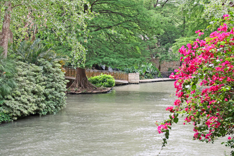 Luxuriant flory na San Antonio rzece zdjęcie royalty free