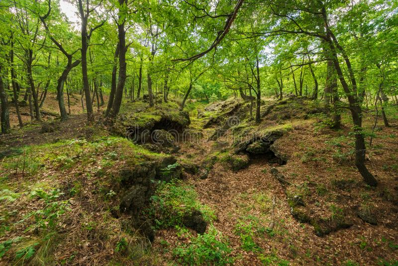 The luxuriant woods of volcano Etna royalty free stock photography