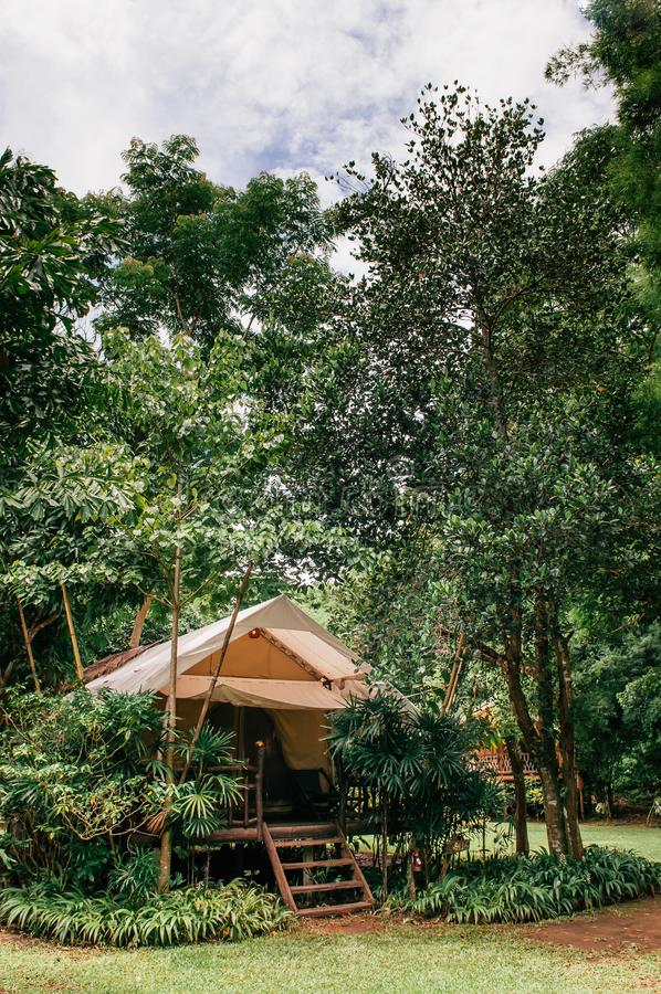 Luxurious camping resort in nature forest, glamping vacation in royalty free stock photography