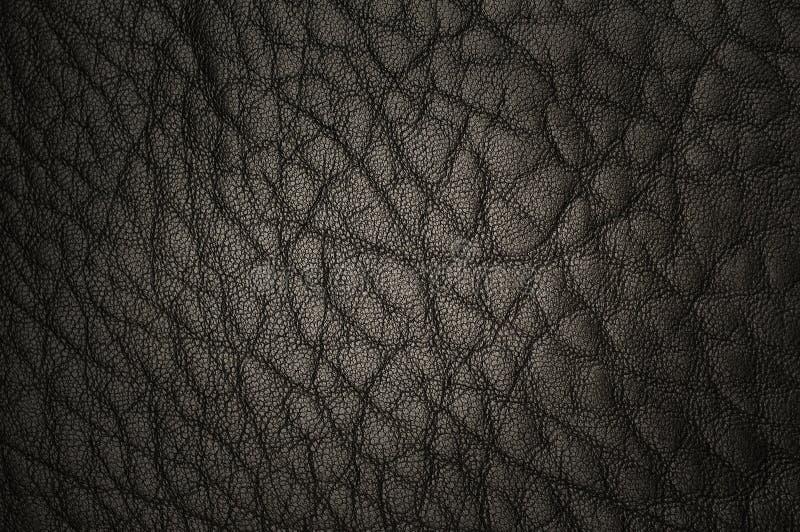 Luxurious leather stock photos