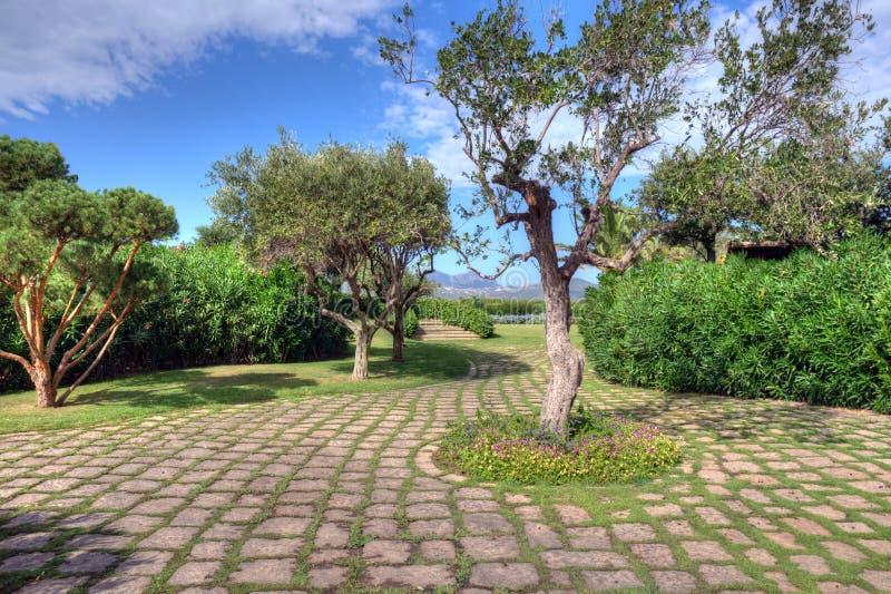 Download A Luxurious Mediterranean Garden Plants Stock Image - Image: 18475697