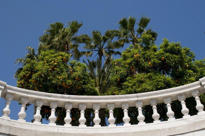 Luxury balcony with plants